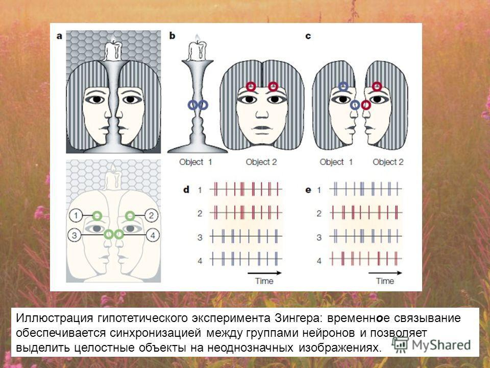 Иллюстрация гипотетического эксперимента Зингера: временное связывание обеспечивается синхронизацией между группами нейронов и позволяет выделить целостные объекты на неоднозначных изображениях.