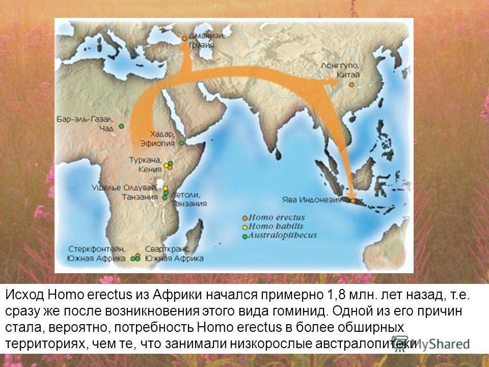Исход Нomo erectus из Африки начался примерно 1,8 млн. лет назад, т.е. сразу же после возникновения этого вида гоминид. Одной из его причин стала, вероятно, потребность Нomo erectus в более обширных территориях, чем те, что занимали низкорослые австр