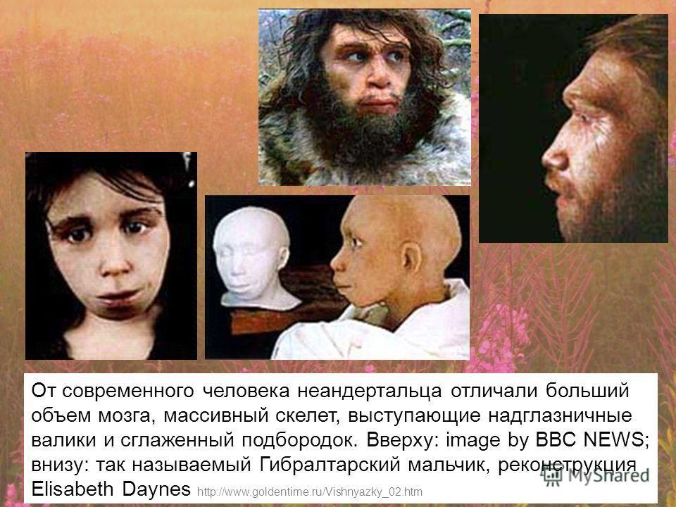От современного человека неандертальца отличали больший объем мозга, массивный скелет, выступающие надглазничные валики и сглаженный подбородок. Вверху: image by BBC NEWS; внизу: так называемый Гибралтарский мальчик, реконструкция Elisabeth Daynes ht