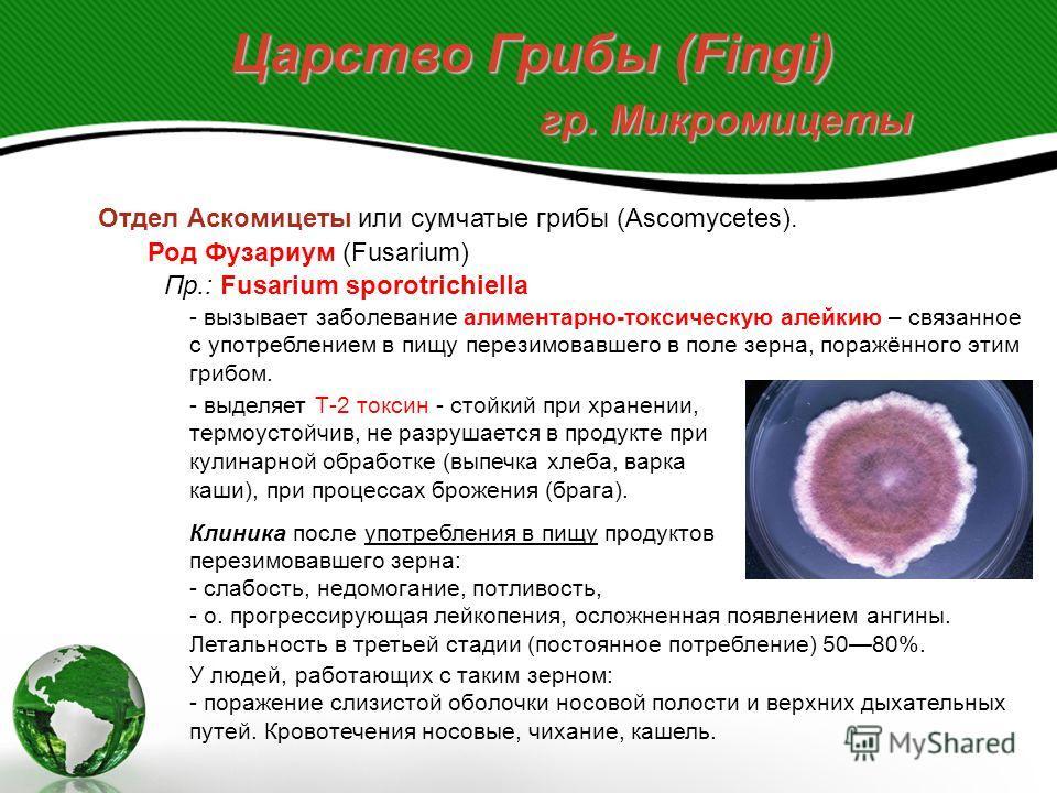 Царство Грибы (Fingi) гр. Микромицеты Отдел Аскомицеты или сумчатые грибы (Ascomycetes). Род Фузариум (Fusarium) широко распространён в природе, есть паразиты и сапрофиты. Большинство фитотрофы. Вызывают микотоксикозы (фузариотоксикозы). Пр.: Fusariu