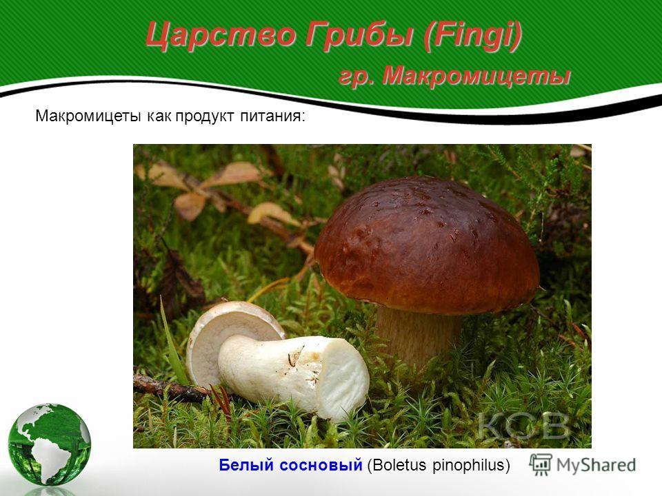 Царство Грибы (Fingi) гр. Микромицеты Отдел Аскомицеты или сумчатые грибы (Ascomycetes). Род Пеницилл (Penicillium) - естественный резервуар - почва - причиняют большой экономический ущерб, вызывая процессы гниения продуктов Токсические пенициллы (ми