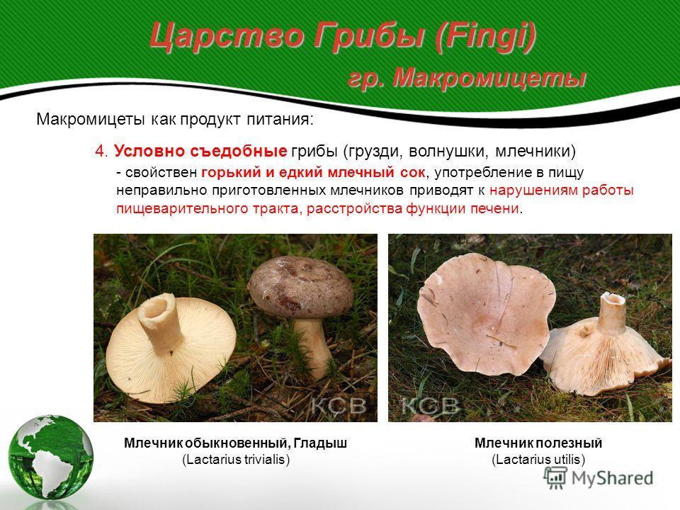 Царство Грибы (Fingi) гр. Макромицеты Макромицеты как продукт питания: 4. Условно съедобные грибы (грузди, волнушки, млечники) - свойствен горький и едкий млечный сок, употребление в пищу неправильно приготовленных млечников приводят к нарушениям раб