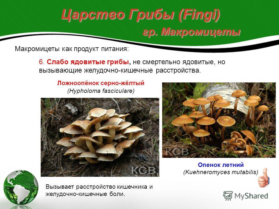 Царство Грибы (Fingi) гр. Макромицеты Макромицеты как продукт питания: 5. Условно съедобные грибы, но ядовитые до соответствующей кулинарной обработки. Ложноопёнок кирпично-красный (Hypholoma sublateritium) Встречается на гниющей древесине. Отвариваю