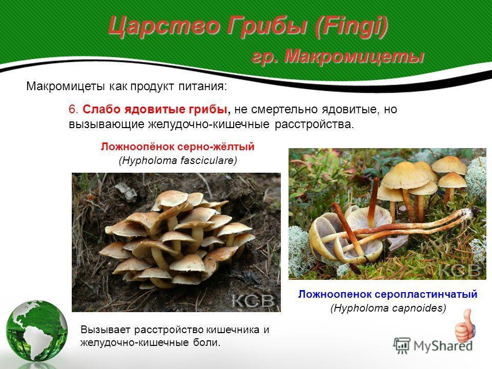 Царство Грибы (Fingi) гр. Макромицеты Макромицеты как продукт питания: 6. Слабо ядовитые грибы, не смертельно ядовитые, но вызывающие желудочно-кишечные расстройства. Ложноопёнок серно-жёлтый (Hypholoma fasciculare) Вызывает расстройство кишечника и