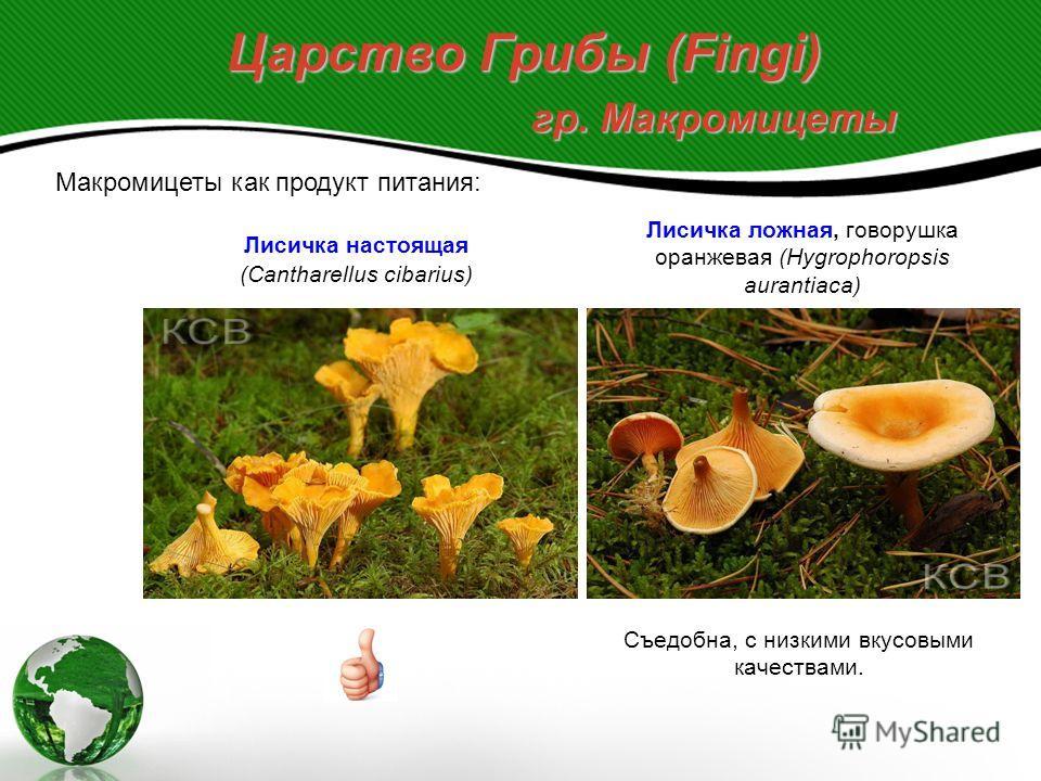 Царство Грибы (Fingi) гр. Макромицеты Макромицеты как продукт питания: 6. Слабо ядовитые грибы, не смертельно ядовитые, но вызывающие желудочно-кишечные расстройства. Сыроежка жгуче-едкая (Russula emetica) Мякоть с жгуче-едким вкусом. Вызывает расстр