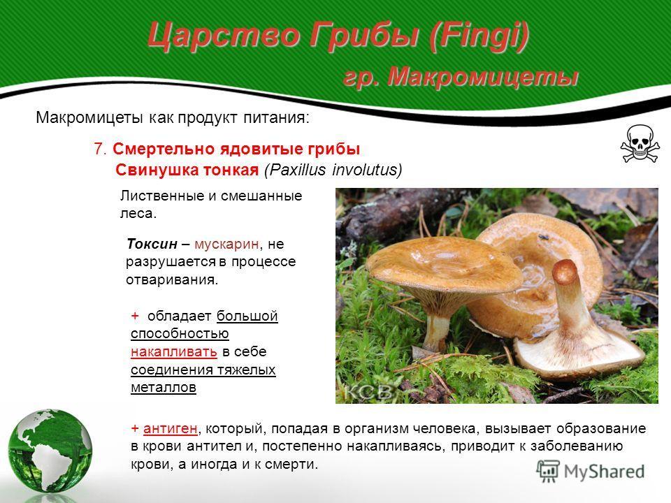 Царство Грибы (Fingi) гр. Макромицеты Макромицеты как продукт питания: 7. Смертельно ядовитые грибы Род Волоконница (Jnocybe), 150 видов, растущих в разных типах лесов. В России найдено около 100 видов. Волоконница Патуйара (Inocybe erubescens) Муска