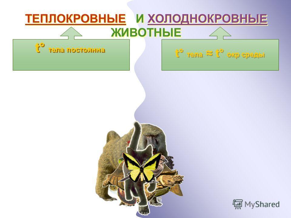 ТЕПЛОКРОВНЫЕ И ХОЛОДНОКРОВНЫЕ ЖИВОТНЫЕ t ° тела постоянна t ° тела t ° окр среды