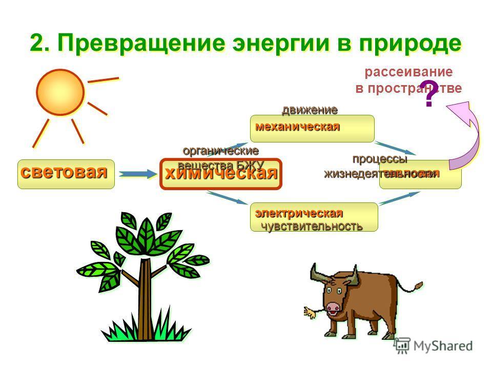 рассеивание в пространстве световая химическая механическая электрическая ? тепловая органические вещества БЖУ движение чувствительность процессы жизнедеятельности 2. Превращение энергии в природе
