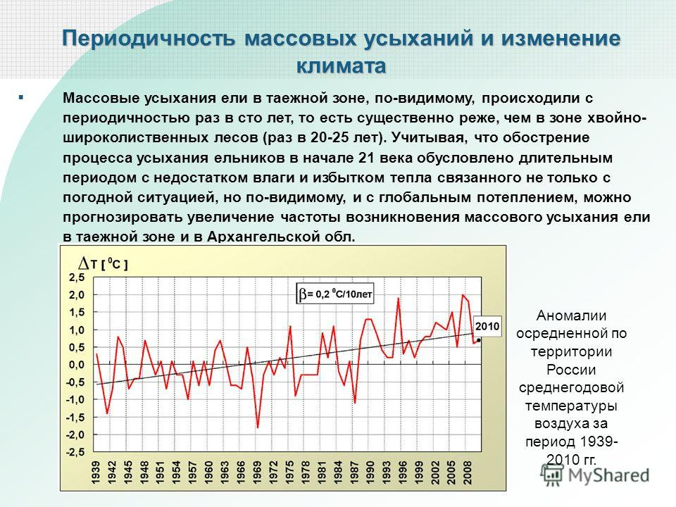 Периодичность массовых усыханий и изменение климата Массовые усыхания ели в таежной зоне, по-видимому, происходили с периодичностью раз в сто лет, то есть существенно реже, чем в зоне хвойно- широколиственных лесов (раз в 20-25 лет). Учитывая, что об