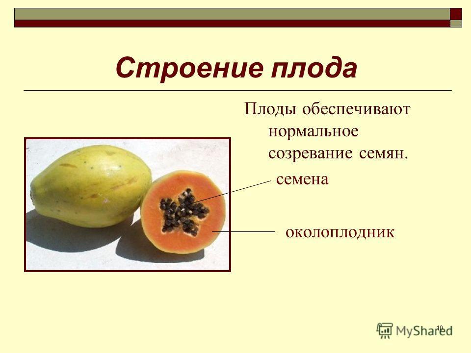 10 Строение плода Плоды обеспечивают нормальное созревание семян. семена околоплодник
