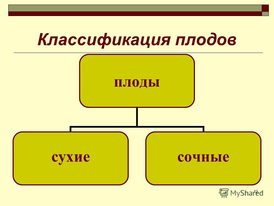 12 Классификация плодов плоды сухиесочные