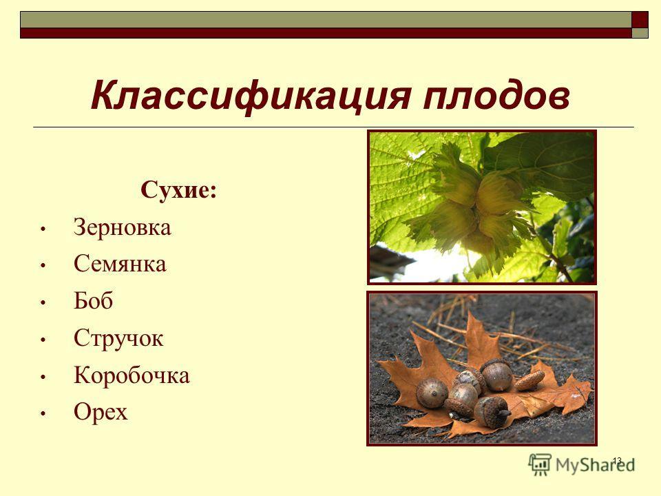 13 Классификация плодов Сухие: Зерновка Семянка Боб Стручок Коробочка Орех