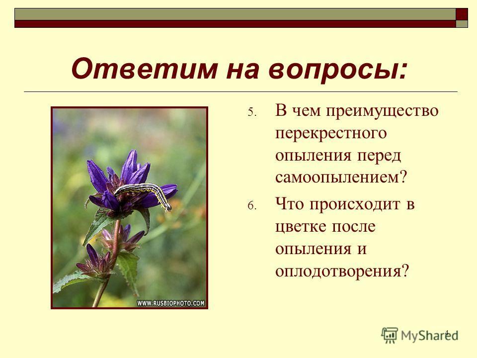 4 Ответим на вопросы: 5. В чем преимущество перекрестного опыления перед самоопылением? 6. Что происходит в цветке после опыления и оплодотворения?