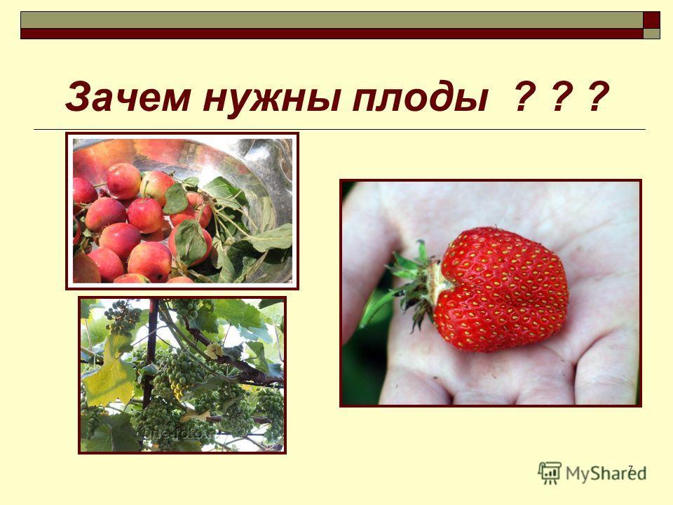 7 Зачем нужны плоды ? ? ?