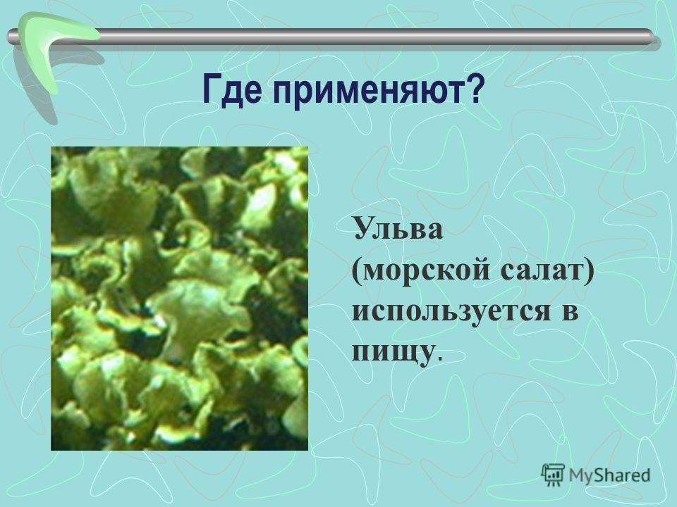 Где применяют? Ульва (морской салат) используется в пищу.