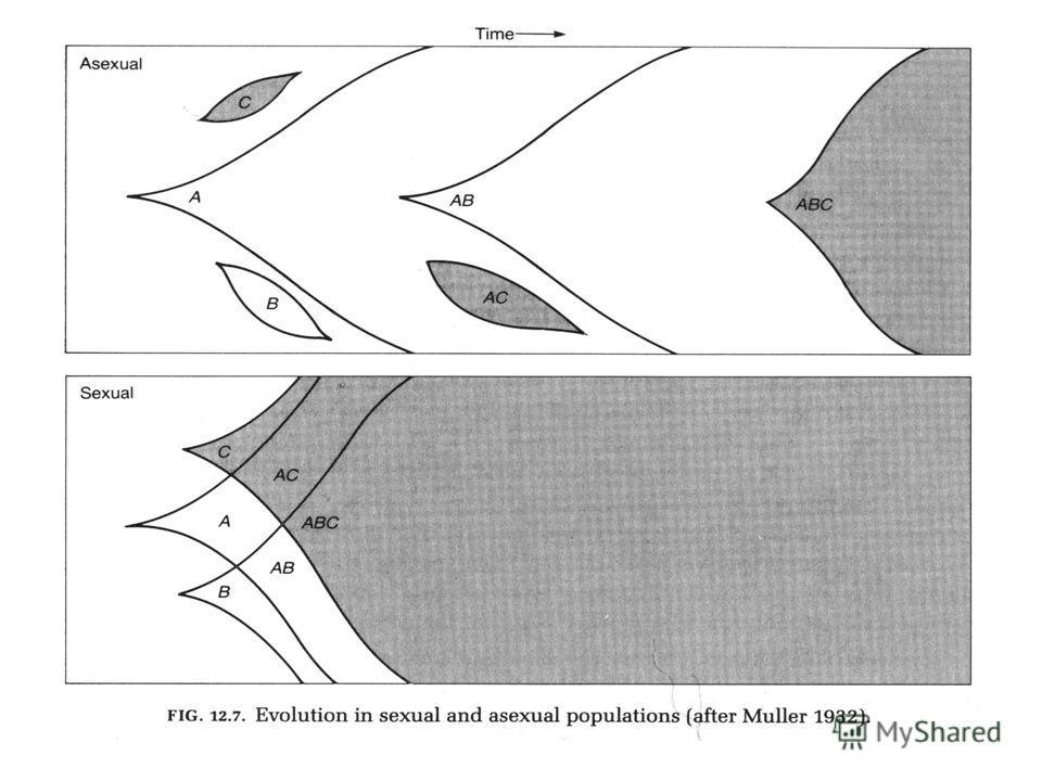 Случайные процессы (групповой отбор) Индивидуальный отбор Элиминация плохих генов Храповик Меллера (Muller 1964) Kondrashov 1988; Agrawal 2001, Siller 2001. Комбинирова ниехороших генов Fisher (1930) – Muller (1932) Паразиты, переключающийся оптимум