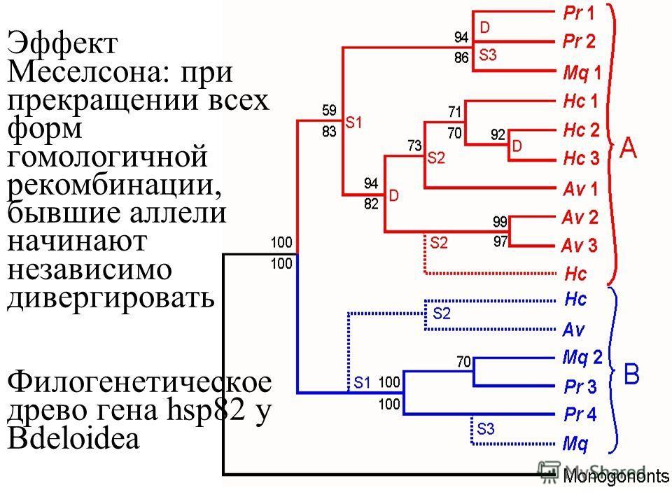 цикличекий партеногенез и география партеногенеза