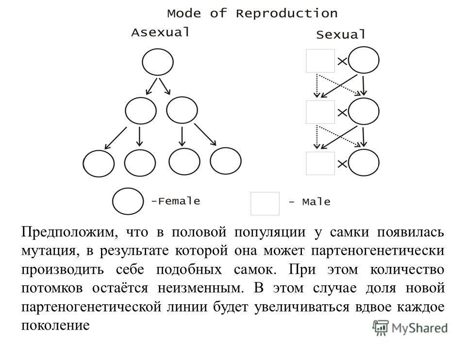 При бесполом размножении каждая особь имеет лишь одного родителя, все гены которого наследуются потомками неизменным образом. Единственным источником генетических изменений являются мутации. При половом размножении, как правило, существует два родите