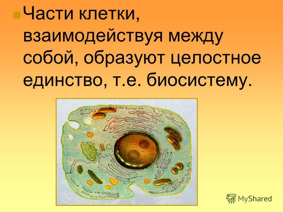 Части клетки, взаимодействуя между собой, образуют целостное единство, т.е. биосистему.