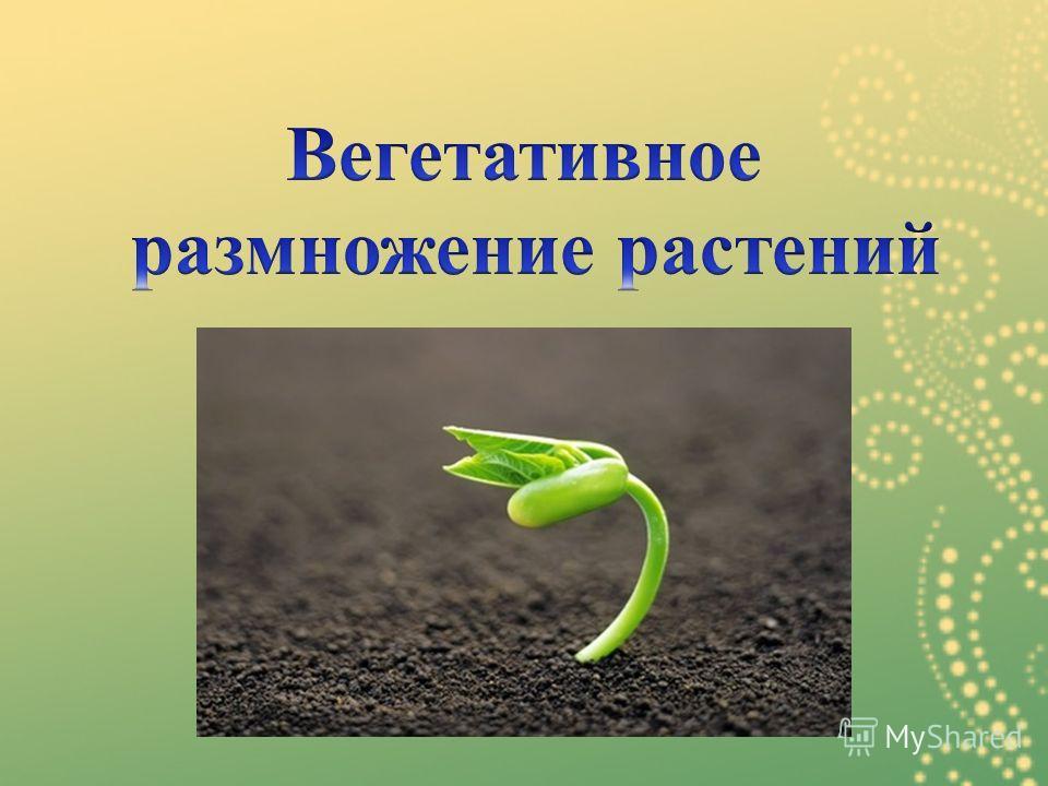 Презентация вегетативное размножение