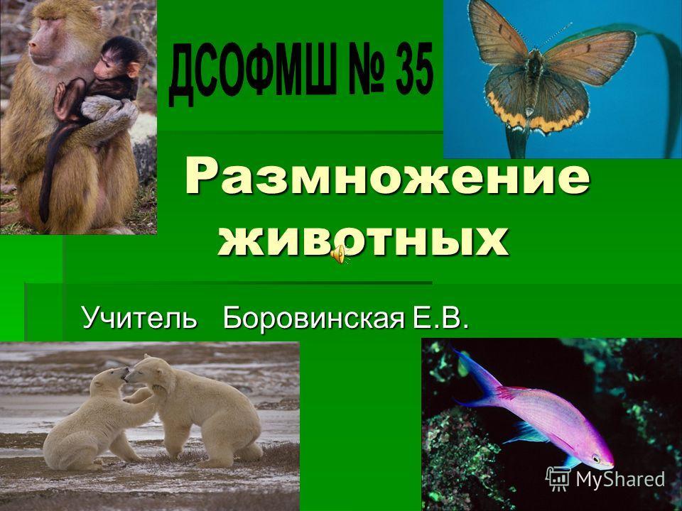 Размножение животных Размножение животных Учитель Боровинская Е.В.