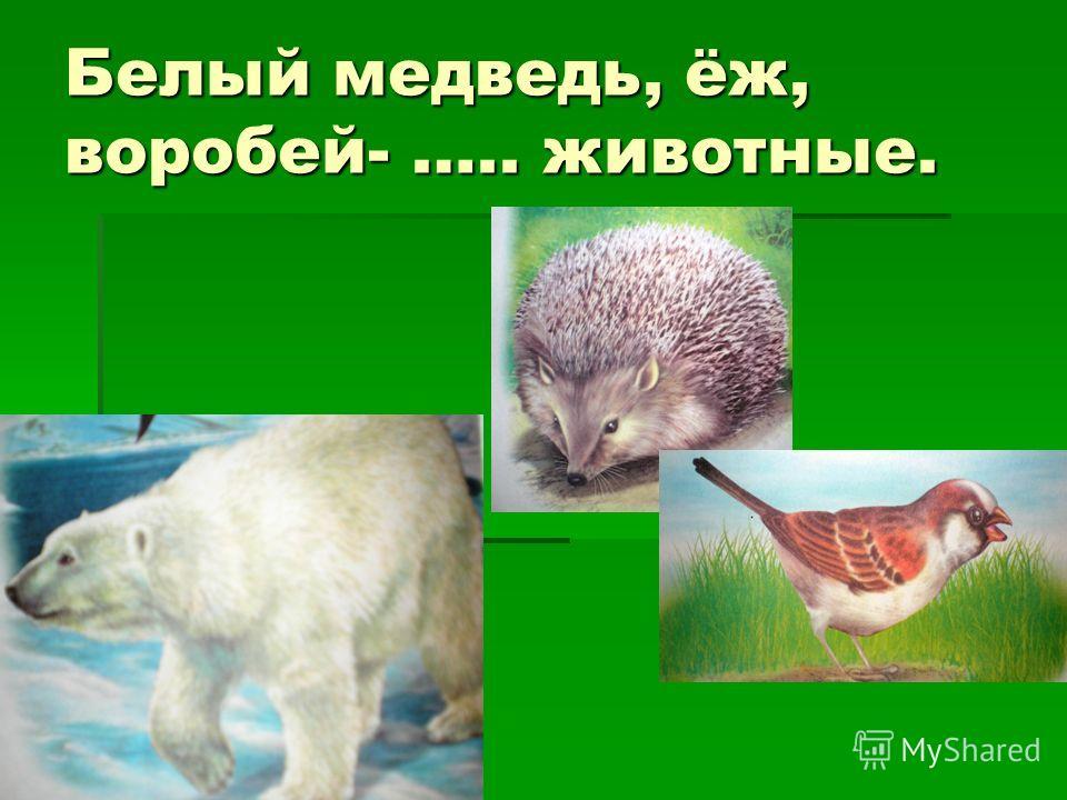 Белый медведь, ёж, воробей- ….. животные.