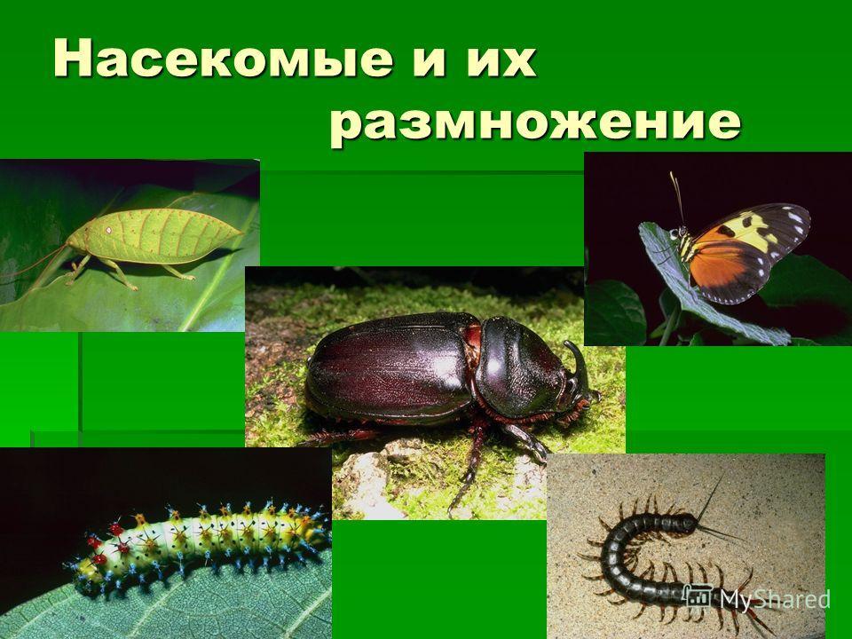 Насекомые и их размножение