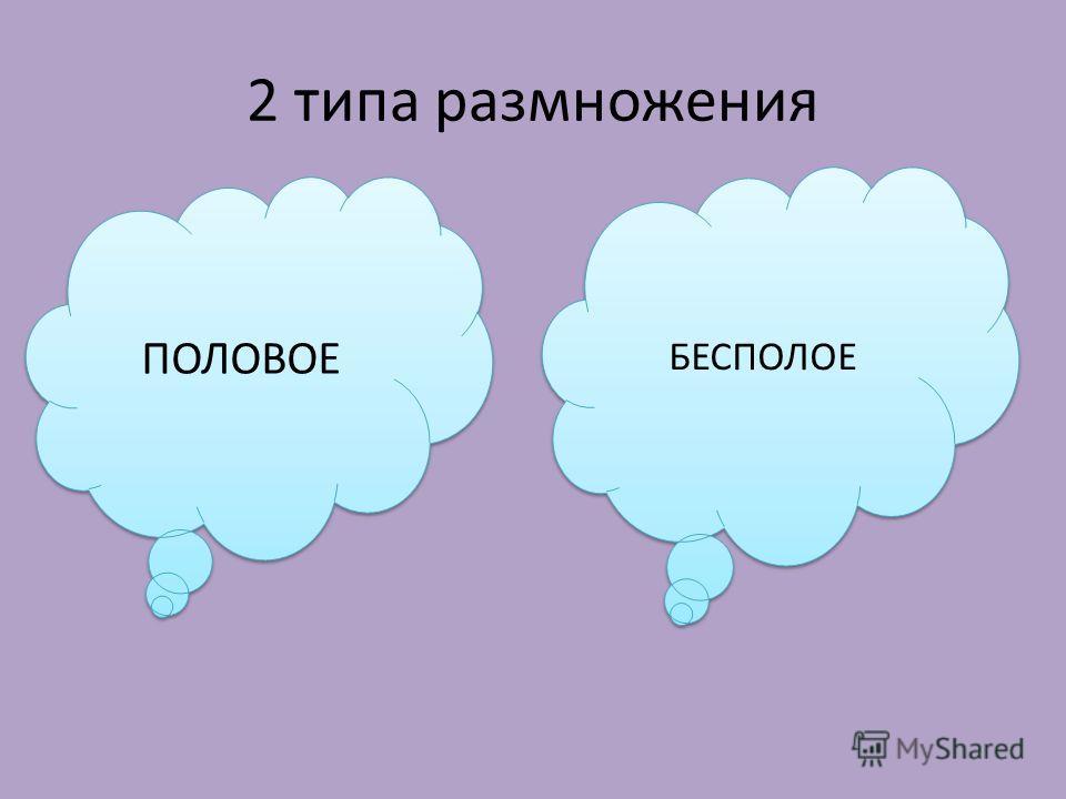 2 типа размножения ПОЛОВОЕ БЕСПОЛОЕ
