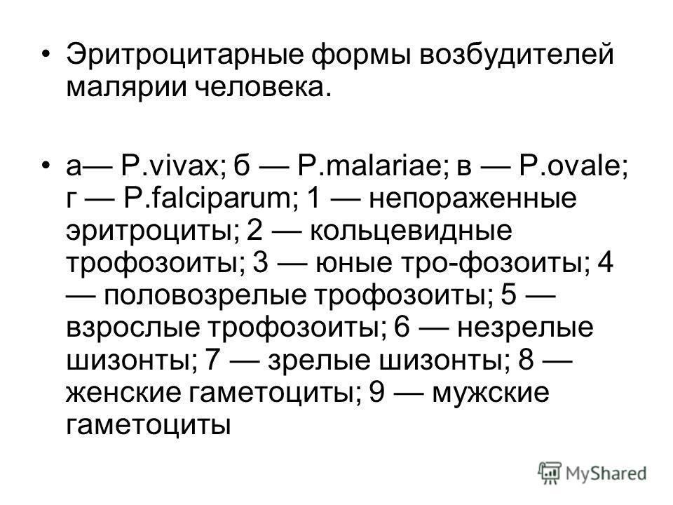 Эритроцитарные формы возбудителей малярии человека. а Р.vivax; б P.malariae; в P.ovale; г P.falciparum; 1 непораженные эритроциты; 2 кольцевидные трофозоиты; 3 юные тро-фозоиты; 4 половозрелые трофозоиты; 5 взрослые трофозоиты; 6 незрелые шизонты;