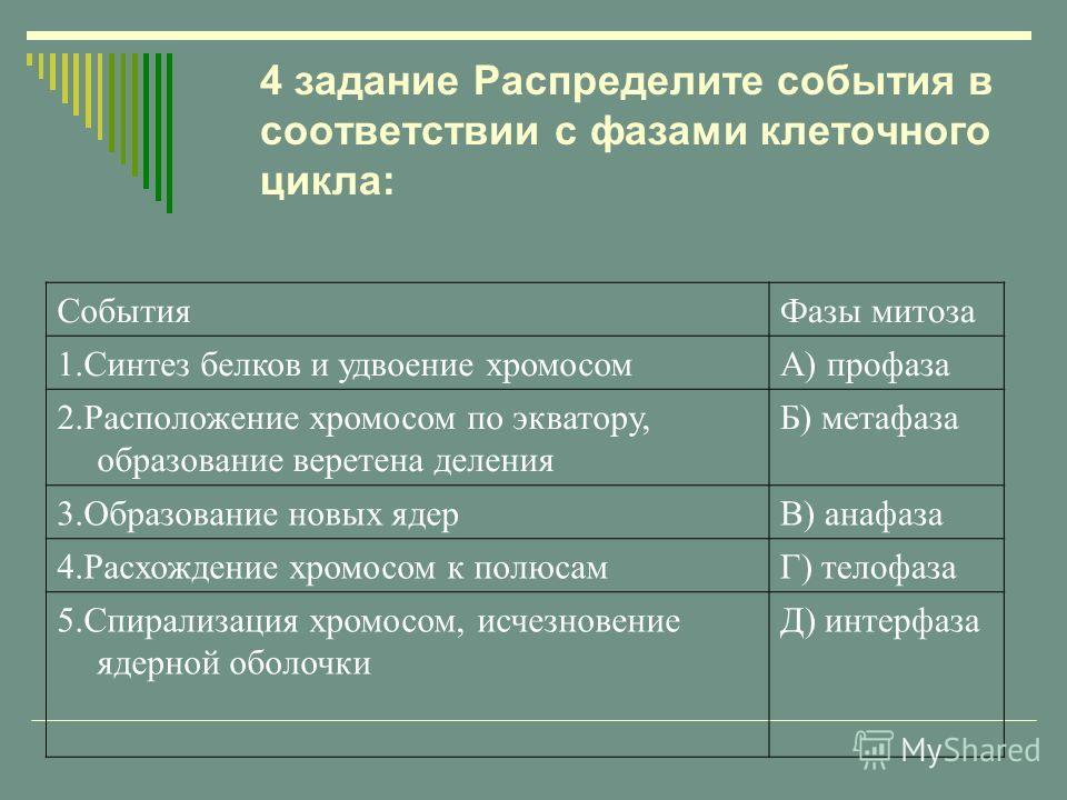СобытияФазы митоза 1.Синтез белков и удвоение хромосомА) профаза 2.Расположение хромосом по экватору, образование веретена деления Б) метафаза 3.Образование новых ядерВ) анафаза 4.Расхождение хромосом к полюсамГ) телофаза 5.Спирализация хромосом, исч