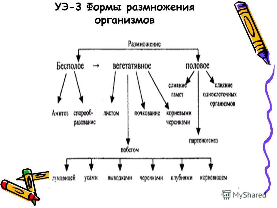 УЭ-3 Формы размножения организмов