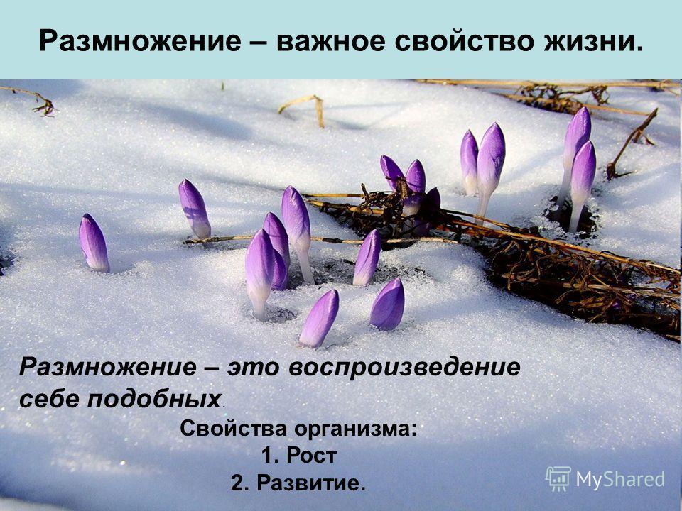 Размножение – важное свойство жизни. Размножение – это воспроизведение себе подобных. Свойства организма: 1.Рост 2.Развитие.