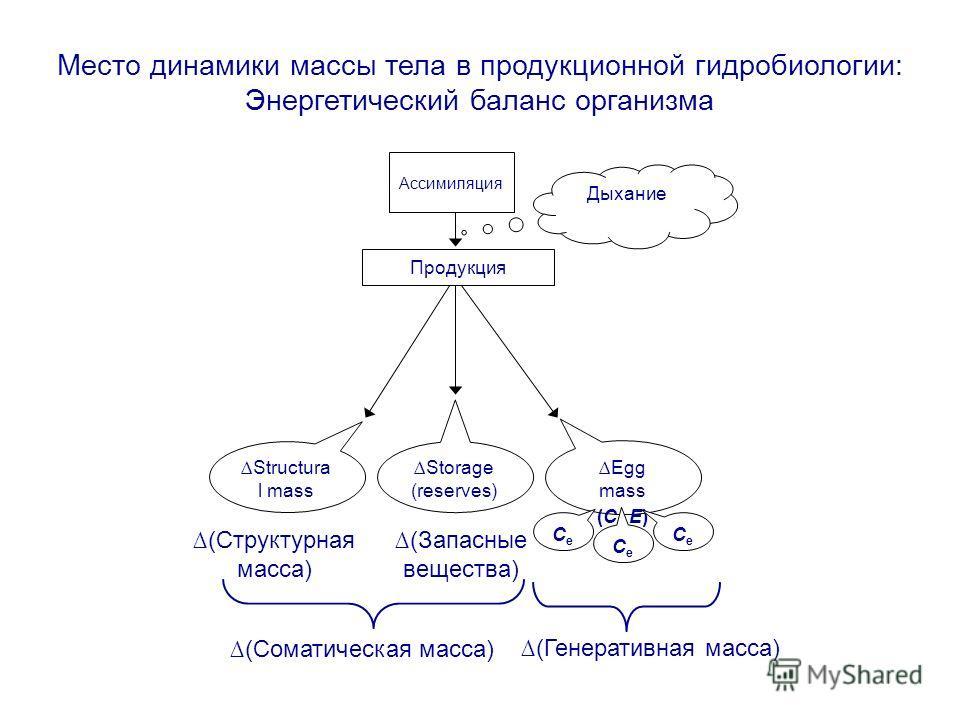 Место динамики массы тела в продукционной гидробиологии: Энергетический баланс организма Продукция Structura l mass Storage (reserves) Egg mass (C e E) Дыхание Ассимиляция CeCe CeCe CeCe (Структурная масса) (Запасные вещества) (Генеративная масса) (С