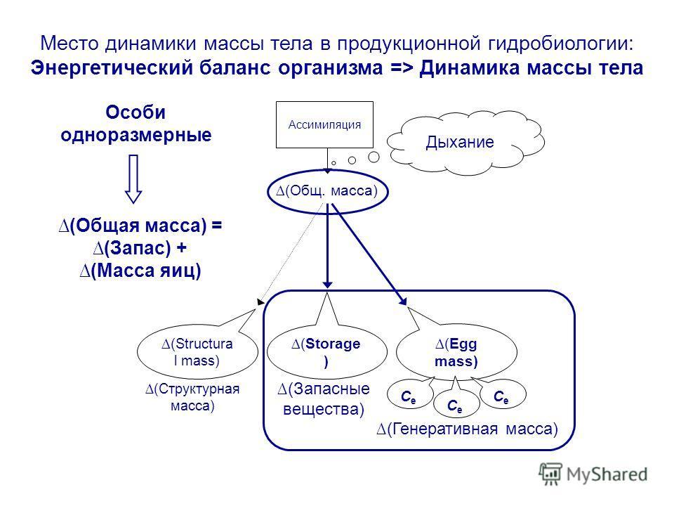 (Общ. масса) ( Structura l mass) (Storage ) (Egg mass) Дыхание Ассимиляция CeCe CeCe CeCe Особи одноразмерные Место динамики массы тела в продукционной гидробиологии: Энергетический баланс организма => Динамика массы тела (Структурная масса) (Запасны