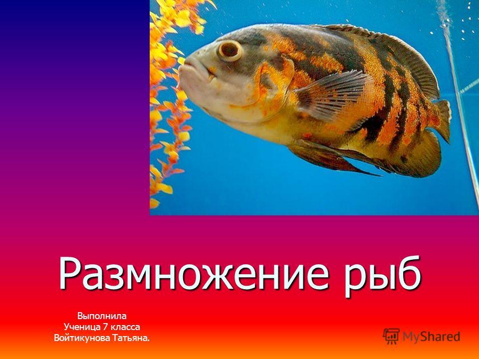 Размножение рыб Выполнила Ученица 7 класса Войтикунова Татьяна. Выполнила Ученица 7 класса Войтикунова Татьяна.