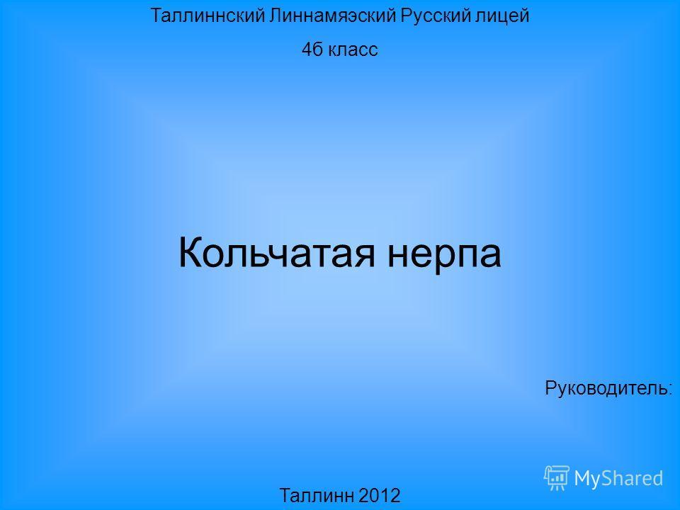 Таллиннский Линнамяэский Русский лицей 4б класс Кольчатая нерпа Руководитель: Таллинн 2012