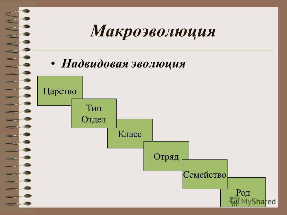 Макроэволюция Надвидовая эволюция Род Царство Класс Тип Отдел Отряд Семейство
