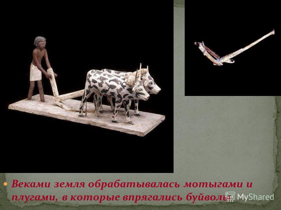 Веками земля обрабатывалась мотыгами и плугами, в которые впрягались буйволы.