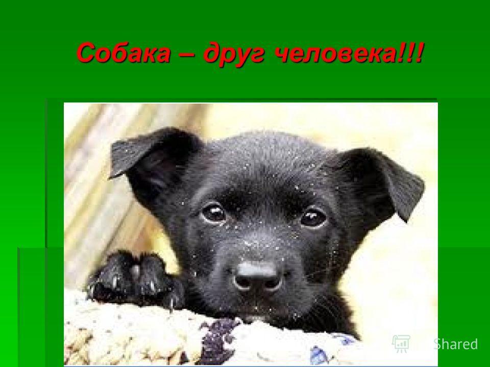 Собака – друг человека!!!