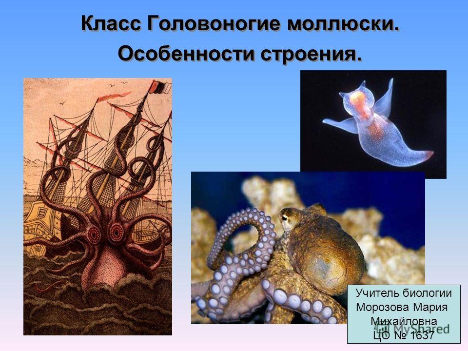 Класс Головоногие моллюски. Особенности строения. Класс Головоногие моллюски. Особенности строения. Учитель биологии Морозова Мария Михайловна ЦО 1637