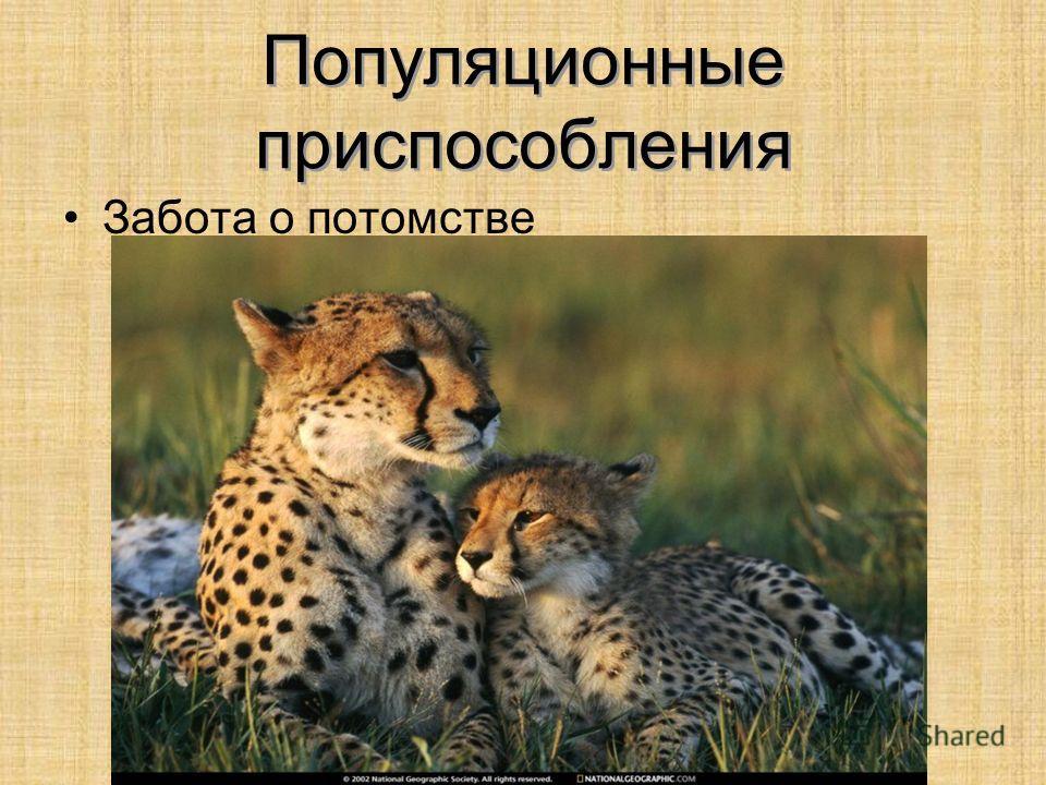 Популяционные приспособления Забота о потомстве
