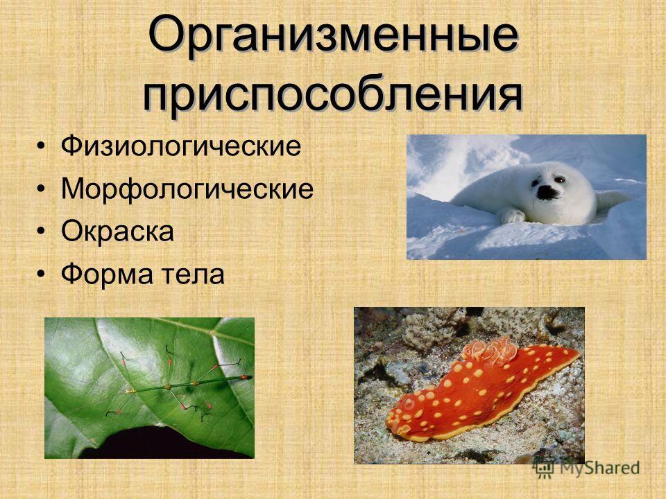 Организменные приспособления Физиологические Морфологические Окраска Форма тела