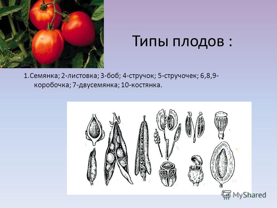 Типы плодов : 1.Семянка; 2-листовка; 3-боб; 4-стручок; 5-стручочек; 6,8,9- коробочка; 7-двусемянка; 10-костянка. 2 3 5 6 7 8 1 48 9 10 3