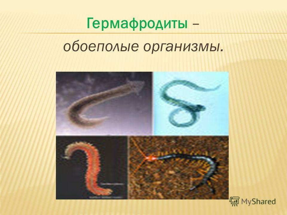 Гермафродиты – обоеполые организмы.