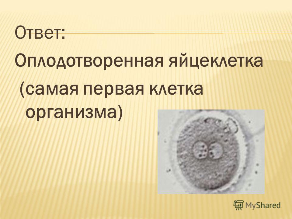 Ответ: Оплодотворенная яйцеклетка (самая первая клетка организма)