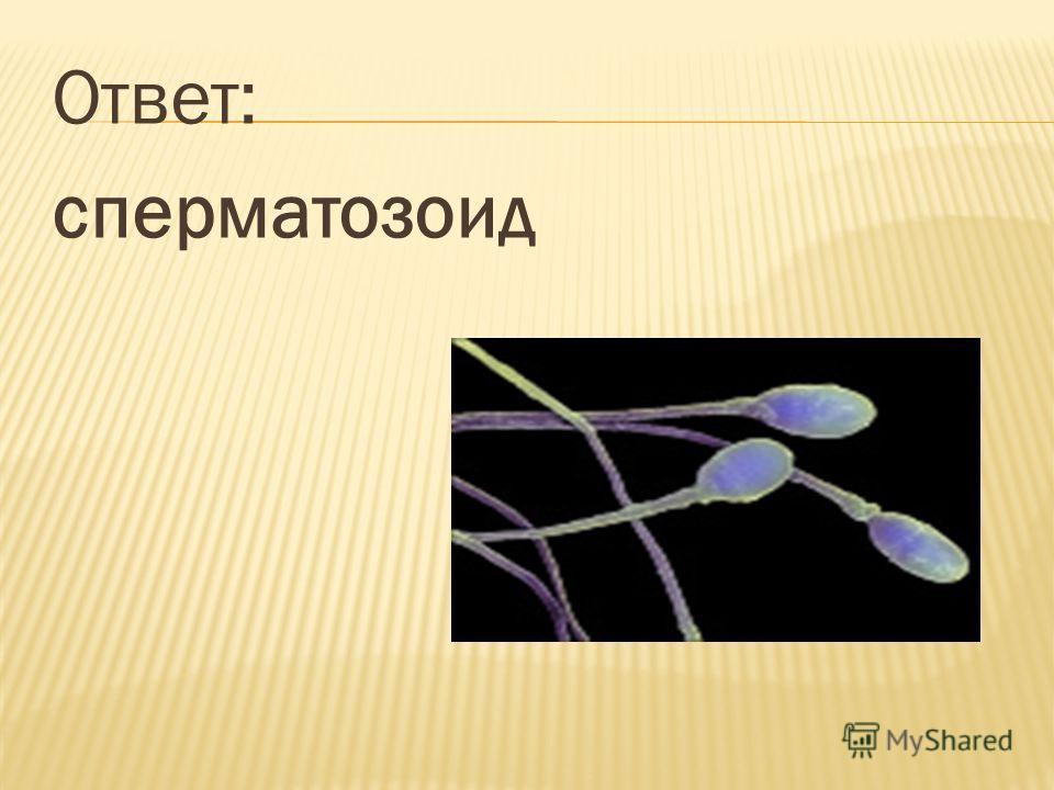 Ответ: сперматозоид
