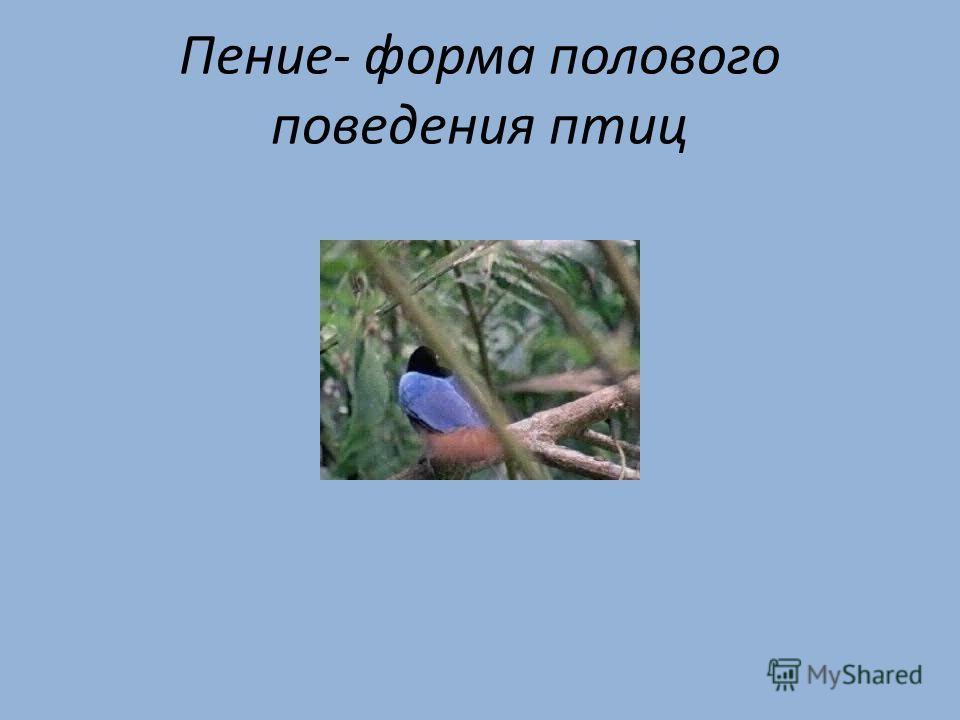Пение- форма полового поведения птиц