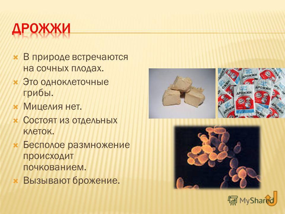 В природе встречаются на сочных плодах. Это одноклеточные грибы. Мицелия нет. Состоят из отдельных клеток. Бесполое размножение происходит почкованием. Вызывают брожение.