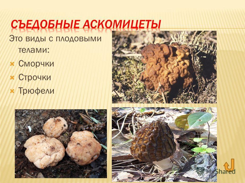 Это виды с плодовыми телами: Сморчки Строчки Трюфели