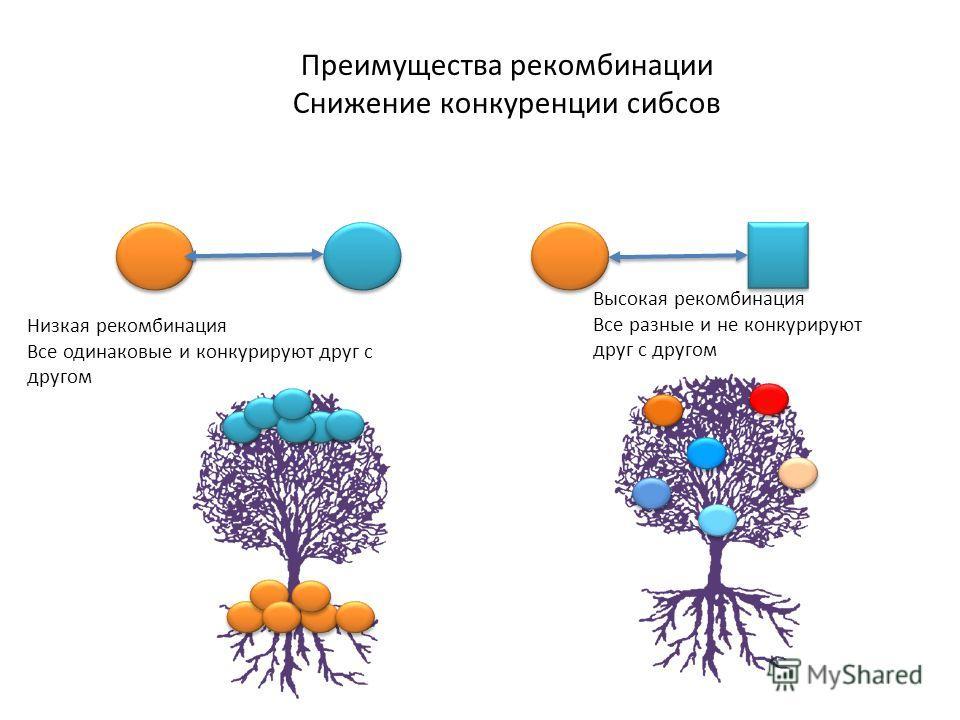Преимущества рекомбинации Снижение конкуренции сибсов Высокая рекомбинация Все разные и не конкурируют друг с другом Низкая рекомбинация Все одинаковые и конкурируют друг с другом